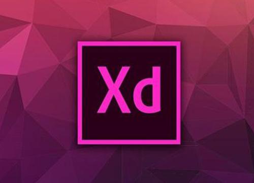 Adobe XD专题